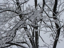 Schnee in den Bäumen Lizenzfreie Stockfotos