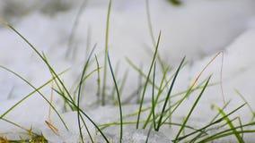 Schnee, der auf einem kleinen Grashalm in der hohen Auflösung schmilzt Timelapse stock video