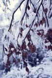 Schnee, der die Bäume bedeckt Stockbilder