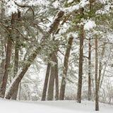 Schnee, der in einen Wald fällt Lizenzfreie Stockbilder