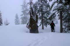 Schnee, der in Kalifornien-Sierra Berge beschuht Stockbild