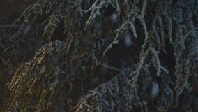 Schnee, der nachts 04 fällt stock video footage