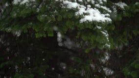Schnee, der in Natur 02 fällt stock video