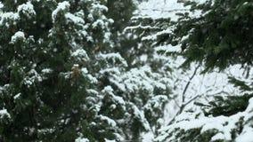 Schnee, der in Natur 03 fällt stock video