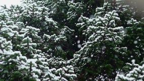 Schnee, der in Natur 06 fällt stock video footage