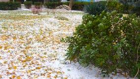 Schnee in der südlichen Region mit gelben Blättern im Park und in den Grünpflanzen stock video