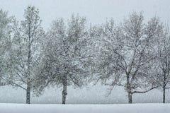 Schnee, der unter Bäumen fällt Lizenzfreie Stockfotografie