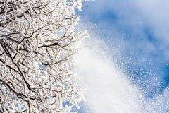 Schnee, der vom Baum fällt Lizenzfreies Stockbild