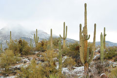 Schnee in der Wüste Lizenzfreies Stockbild