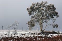 Schnee des frühen Morgens, der beginnt zu schmelzen lizenzfreie stockbilder