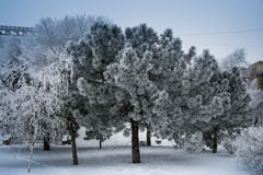 Schnee Donetsk, Ukraine Lizenzfreie Stockfotos