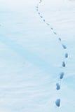 Schnee-Drucke Lizenzfreie Stockfotos