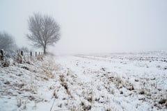 Schnee durchgesetzte Forderung mit Baum Lizenzfreie Stockfotografie