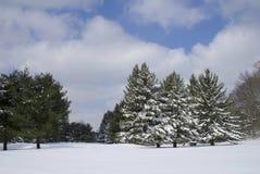 Schnee durchgesetzte Forderung und Bäume Lizenzfreies Stockfoto