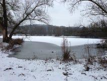 Schnee eijsderbeemden Lizenzfreies Stockfoto