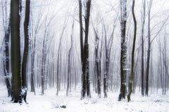 Schnee in einem schönen Wald mit Nebel Stockbilder