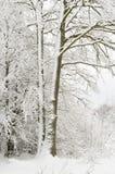 Schnee eingewickelter Baum Lizenzfreies Stockfoto