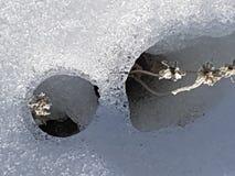Schnee, Eis, Wasser und Anlagen in Cañadas Del Teide, Teneriffa Lizenzfreie Stockfotos