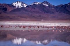 Schnee emporgeragte Berge mit Flamingos reflektieren sich in Laguna Kara, Bolivien stockbild