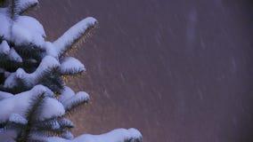 Schnee-Fälle vom dunklen Winter-Himmel auf Snowcapped Tannen-Baum stock video footage