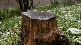 Schnee fällt auf den hölzernen Stumpf und das grüne Gras herum Langsame Bewegung stock video footage
