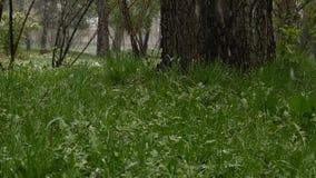 Schnee fällt auf ein grünes Gras Anormales Wetter Fallender Schnee in einem Park mit Gras Langsame Bewegung stock footage