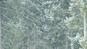 Schnee fällt auf Hintergrund von den grünen Tannenbäumen, die den Rahmen füllen stock footage