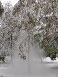Schnee fällt von einem Baum Stockbild