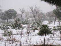 Schnee fällt in Winter lizenzfreie stockbilder
