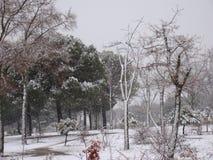 Schnee fällt in Winter nahe Madrid stockfotos