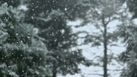 Schnee-Fallen stock video footage