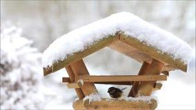 Schnee, fallende Schneeflocken auf Vogelhaus, Vogelzufuhr, Nahaufnahme, Winter stock video