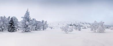 Schnee-Feld und Bäume bedeckt durch Schnee Stockfotografie