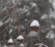 Schnee fiel in den Wald lizenzfreie stockfotos