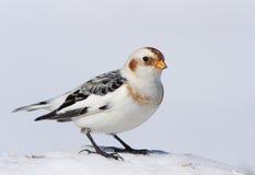 Schnee-Flagge Lizenzfreies Stockbild
