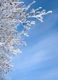 Schnee-Frost umfaßte Zweig Stockfotografie
