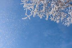 Schnee-Frost umfaßte Zweig Stockbilder