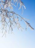 Schnee-Frost umfaßte Zweig der Birke Lizenzfreie Stockbilder