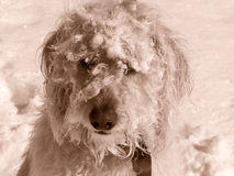 Schnee-Gesicht Teig Stockfotos