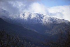 Schnee gezeichnete Bäume auf Berg Stockbild