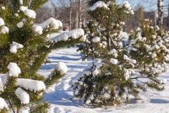 Schnee-Grünbaum des Winters kalter Stockbilder