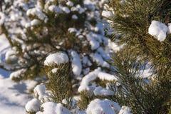 Schnee-Grünbaum des Winters kalter Lizenzfreie Stockfotografie