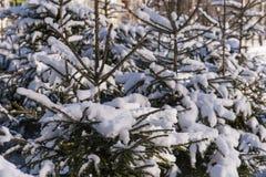 Schnee-Grünbaum des Winters kalter Lizenzfreie Stockfotos