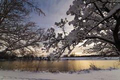 Schnee hängt an den Bäumen nach einem Sturm Lizenzfreies Stockfoto