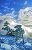 Schnee, Himmel und Kiefern Lizenzfreie Stockfotos