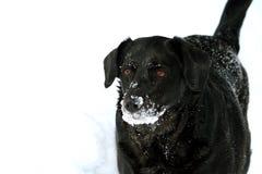 Schnee-Hund Lizenzfreie Stockfotografie
