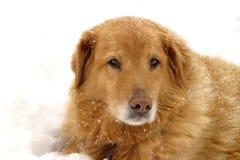 Schnee-Hund stockbild