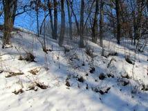 Schnee im Holz Lizenzfreie Stockfotos