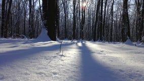 Schnee im Holz Stockfoto