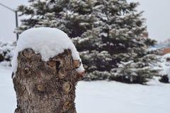 Schnee im Holz Stockfotos